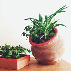 Love this idea: paint the rims of teracotta planters. Indoor Planters, Outdoor Plants, Garden Plants, Planter Pots, Vivarium, Winter Plants, Gardening Tips, Balcony Gardening, Indoor Gardening