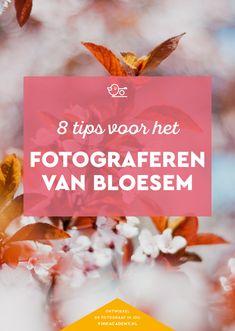 Acht tips voor het fotograferen van bloesem #natuurfotografie #lente