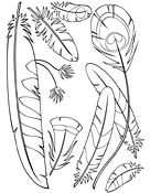 Ask A Biologist Coloring Page Feather Type Anatomy Worksheet