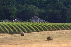 MarshAnne Landing Winery 2013 Music Season