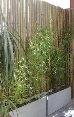 Bamboo Fence Ideas 7 Though ancient around strategy, your pergola continues to be enduring somewhat Back Gardens, Small Gardens, Outdoor Gardens, Diy Pergola, Balcony Design, Garden Design, Balcony Ideas, Patio Ideas, Backyard Ideas