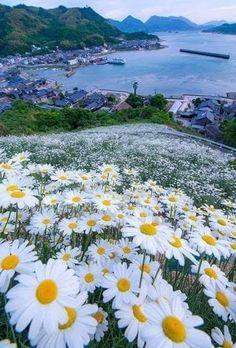 Beautiful scenery at Shimanami Kaiun within the Mihara City, Hiroshima Prefecture Japan Beautiful World, Beautiful Images, Beautiful Flowers, Beautiful Beach, Beautiful Scenery, Flowers Nature, Wild Flowers, Daisy Flowers, Nature Pictures