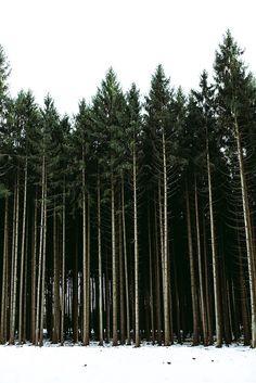 Woods http://flic.kr/p/qxyUYC
