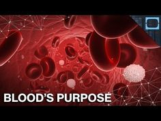 Why Do We Have Blood? Blood is that red liquid that flows through your body and each of us have about 9 - 12 pints in us on average. But what does it do for your body and what is it made of exactly? Sources:Blood Facts And Statistics Sickle Cell Anemia What Are White Blood Cells? Basophils CD4 Count (Or T-Cell Count) Innate Immunity: The First Line Of Defence Blood Basics Understanding How Blood Works By: TestTube Plus.