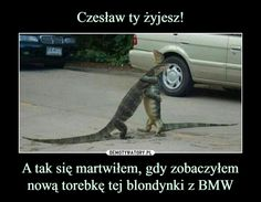 JASZCZURKA Z BMW