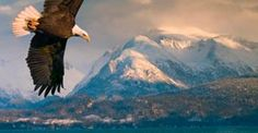 Experience Skagway, Alaska on board a Norwegian Cruise.