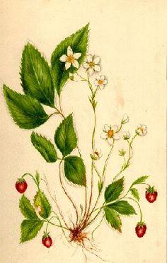 Strawberries inspiration