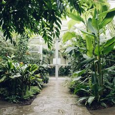 We took a trip back here again it's still one of the best places we've visited. Have you been? - - - #Haarkon #HaarkonGreenhouseTour #GreenhouseHunter #greenhouse #nature #naturephotography #urbangreen #garden #instaplant #oxford #oxforduniversity #oxfordbotanicgarden #botanic #botanical #botanicalgardens #plant #plants #englishgarden #england #uk #plantstrong #plantsofinstagram #instagarden #greeninterior #botanicalpickmeup  #glasshouse #visitengland