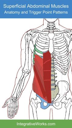 Trigger Points – Wide Band of Pain Across the Top of the HipsIntegrative Works Human Body Anatomy, Muscle Anatomy, Abdominal Muscles Anatomy, Back Routine, Neuromuscular Therapy, Mid Back Pain, Rib Pain, Sciatica Exercises, Stretching Exercises