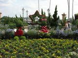 P1010070 Mickey amp Minnie topiary