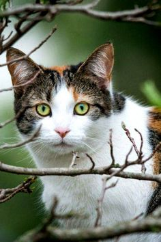 Beautiful cat love the eyes Beautiful Cats, Animals Beautiful, Lovely Eyes, Kittens Cutest, Cats And Kittens, Cats Meowing, Baby Animals, Cute Animals, Cat Toilet Training