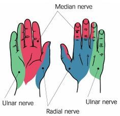Neurological Assessment of the Distal Upper Extremity Median Nerve -Sensory: innervation is purest on the volar skin of the tip of the index finger -Motor: ask pt. to touch the thumb to the fifth finger Ulnar Nerve -Sensory: innervation is purest o Nerve Anatomy, Anatomy Study, Arm Anatomy, Human Anatomy, Ulnar Nerve, Peripheral Nerve Injury, Radial Nerve, Medical Anatomy, Muscle Anatomy