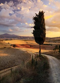 "Italy, Tuscany, Val d'Orcia. One scene from the movie ""the gladiator"" with Russell Crowe was filmed here"
