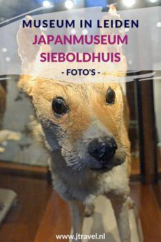 In het Japanmuseum SieboldHuis aan de Rapenburg in Leiden zie veel voorwerpen uit Japan, zoals lakwerk, keramiek, geprepareerde dieren, munten, kleding, oude landkaarten en prenten. Deze voorwerpen zijn tussen 1823 en 1829 verzameld door Philipp Franz von Siebold. Gratis toegankelijk met je museumkaart. Mijn foto's die ik maakte in dit museum zie je hier. Kijk je mee? #leiden #japanumuseumsieboldhuis #museumkaart #museum #jtravel #jtravelblog #fotos