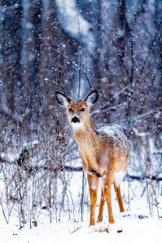 Fotogalerie zasněžených krajin Iphone Mobile Wallpaper, 8k Wallpaper, Photography Ideas At Home, Animal Photography, Winter Snow Wallpaper, Winter Wallpapers, Funny Animals, Cute Animals, Reflection Photos