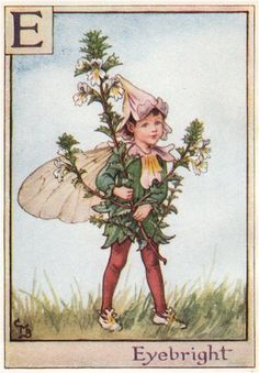 FLOWER FAIRIES/BOTANICALS: Eyebright; This is an original vintage Cicely Mary Barker Flower fairies colour print. It is not a modern reproduction, c1934; approximate size 11.0 x 7.5cm, 4.25 x 3 inches