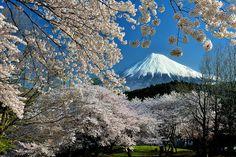 Japanese Landscape, Sns, Cherry Blossoms, Fuji, Mount Rainier, Mountains, World, Nature, Travel