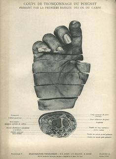 Page fromHidden Treasure, a spectacular book with 450 images, celebrating the 175th anniversary of the National Library of Medicine, the world's largest medical library.
