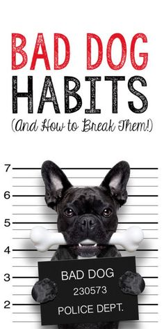 Chewing, leash pulling, digging. These are just a few of the typical less-than-cute habits a dog can display that can be rough for pet owners. But every dog has its day to learn a few new tricks and good behaviors, and we're here to help. Take a look at 5 common bad dog habits and how to break them so your naughty pup can go back to being a good boy or girl.