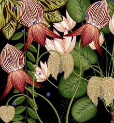 Katie Scott - detail from living wallpaper animation Motif Floral, Arte Floral, Botanical Flowers, Botanical Prints, Botanical Bedroom, Merian, Nature Illustration, Botanical Drawings, Design Graphique