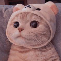 Cute Baby Cats, Cute Kittens, Cute Little Animals, Cute Cats And Kittens, Cute Funny Animals, I Love Cats, Meme Chat, Cute Cat Wallpaper, Cat Icon