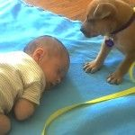Tiny Puppy Snuggles Up To Newborn And Does The Sweetest Thing Ever