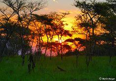 A Bushveld sunset through the trees