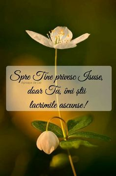 Jesus Loves You, My Prayer, God Jesus, Gods Love, Plant Leaves, Prayers, Love You, Plants, Verses