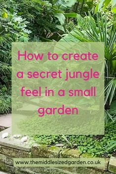 Tips from jungle garden expert Philip Oostenbrink on how to create the lush, layered effect and make your own jungle haven #middlesizedgarden Small Courtyard Gardens, Back Gardens, Small Gardens, What Is A Jungle, Jungle Gardens, Tree Fern, Ground Cover Plants, Gardening Books, Foliage Plants