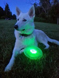 Cool night shot of the Flashflight Dog Discuit.