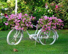 Chincoteague bicycle