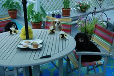 These are my 3 cavalier king charles spaniels - 9th birthday party