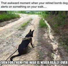 Military dogs can suffer from PTSD. Let's help them and human soldiers.