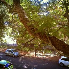 Stellenbosch in Autumn ; Rest Of The World, Country Roads, Plants, Autumn, Instagram, Fall, Planters, Plant, Planting