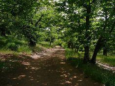 Camino del rodeo al Cerro del Castaño