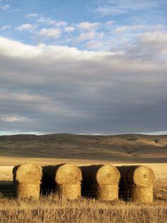 baling hay bozeman, MT