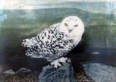 'Snowy Owl' by Richard Bawden (etching and aquatint)