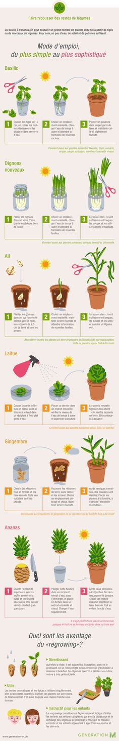 The infographic shows you how to make new vegetables from kitchen leftovers - Gartenideen & Tipps - Garten Design Herb Garden, Indoor Garden, Garden Plants, Indoor Plants, Garden Hedges, Vegetable Garden, Outdoor Gardens, Organic Gardening, Gardening Tips