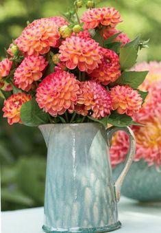 Love this color Dahlia! Days of Flowers - Best Spring Flower Arrangements - Veranda) Spring Flower Arrangements, Floral Arrangements, Fresh Flowers, Pretty Flowers, Exotic Flowers, Spring Wedding Flowers, Deco Floral, Floral Design, Most Beautiful Flowers