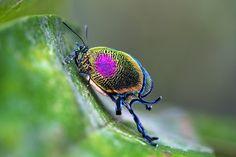 Tropical+Rainforest+Butterflies | Além de rara, considero esta uma das mais belas borboletas ...