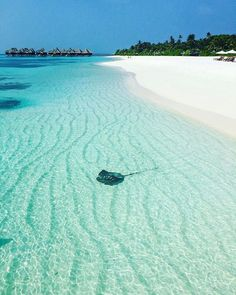 Ultimate Travel Guide: Why Visit Maldives Now Coco Palm Maldives, Visit Maldives, Maldives Travel, Paradise Island, Island Life, Maldives Destinations, Beach Pictures, Ocean Beach, Beautiful Beaches