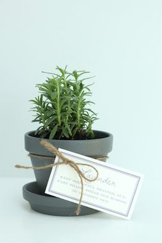 Hostess Gift - easy to maintain lavender pot