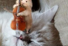 Mozart per gatti Fat Cats, Cats And Kittens, Crazy Cat Lady, Crazy Cats, Animal Pictures, Cute Pictures, Funny Animals, Cute Animals, I Love Cats
