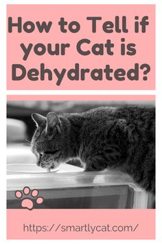 Let's discuss how you can tell if your cat is dehydrated. We'll then try to figure out why the cat is dehydrated. #cat #cats #kitten #kittens #catsandkittens #kittencare #kittenbehavior #catcare #cat_care #catlove #cat_love #catbehavior #cat_behavior #catowner #cat_owner #catowners #cat_owners #catlifestyle #cat_lifestyle #smartlycat Crazy Cat Lady, Crazy Cats, Kittens Cutest, Cats And Kittens, Sunken Eyes, Signs Of Dehydration, Not Drinking Enough Water, Cat Water Fountain, Kitten Care