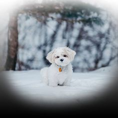 Inspiration To Help Name Your New White Puppy. Naming a puppy is a big decision we have put together an article to help you name your new white family member. Cute White Dogs, White Puppies, Dogs And Puppies, Best Puppy Names, Dog Names, Cute Beagles, Puppy Care, Pet Safe, New Puppy
