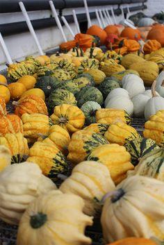 Gourds galore in the glasshouses at West Dean Gardens. Gourds, Dean, England, Gardens, Pumpkin, Autumn, Vegetables, Food, Pumpkins