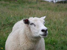 Rolnicy ostrożnie strzyżą swoje zwierzaki w takcie ekologicznego wypasu, ale włosy zwierzętom natychmiast odrastają. Nie musimy się obawiać, że jest im zimno, bo są do tego stworzone. W końcu taki plan obmyśliła Matka Ziemia. Najbardziej subtelną przędzę otrzymuje się z owiec, które obgalane są po raz pierwszy. Ich  pierwsze sierści są bardzo miękkie i powstają z nich wspaniałe ubrania najwyższej jakości.