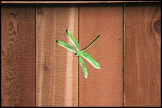 dragonfly fence!!