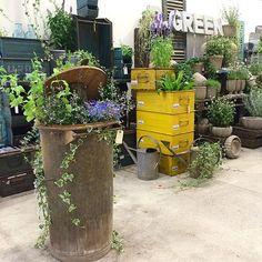Wallitsch Nursery And Garden Center   Louisville, KY, United States. Their  Newu2026 | Magic In The Retail Garden Center | Pinterest | Nursery And Gardens