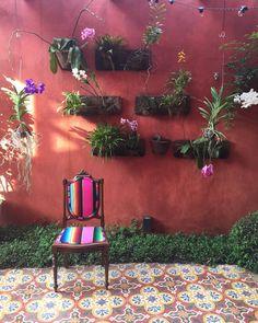 bossanossacasa: A época agora agora é delas #orquideas #orquidario #orquideavanda bossanossacasa#casavogue#paisagismo#casaejardim#elledecor#jardinagem#flores#floriravida